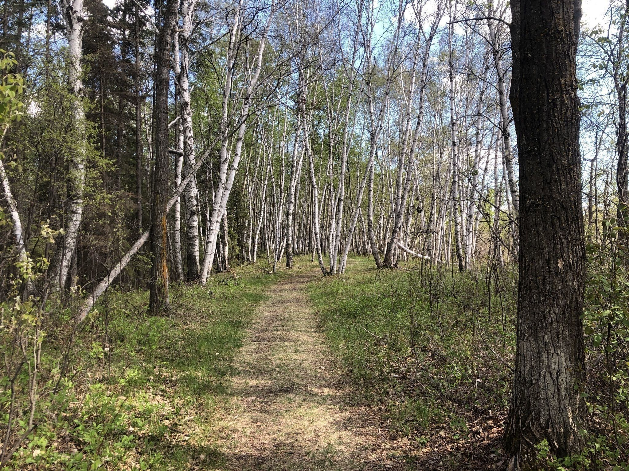 5 Day Hikes From Edmonton (4)